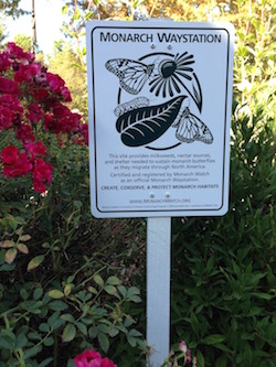 Monarch Waystation 8560